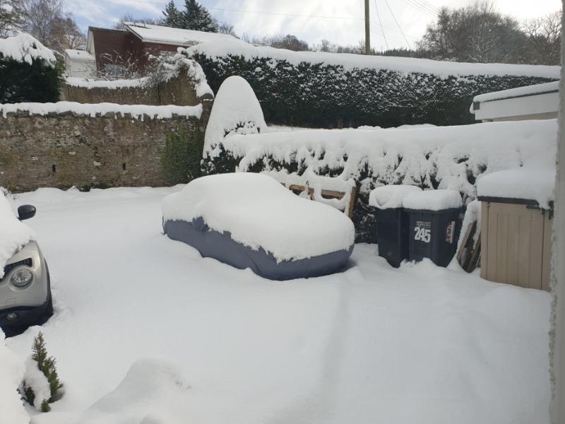 20210210_Mindy in the snow.jpg